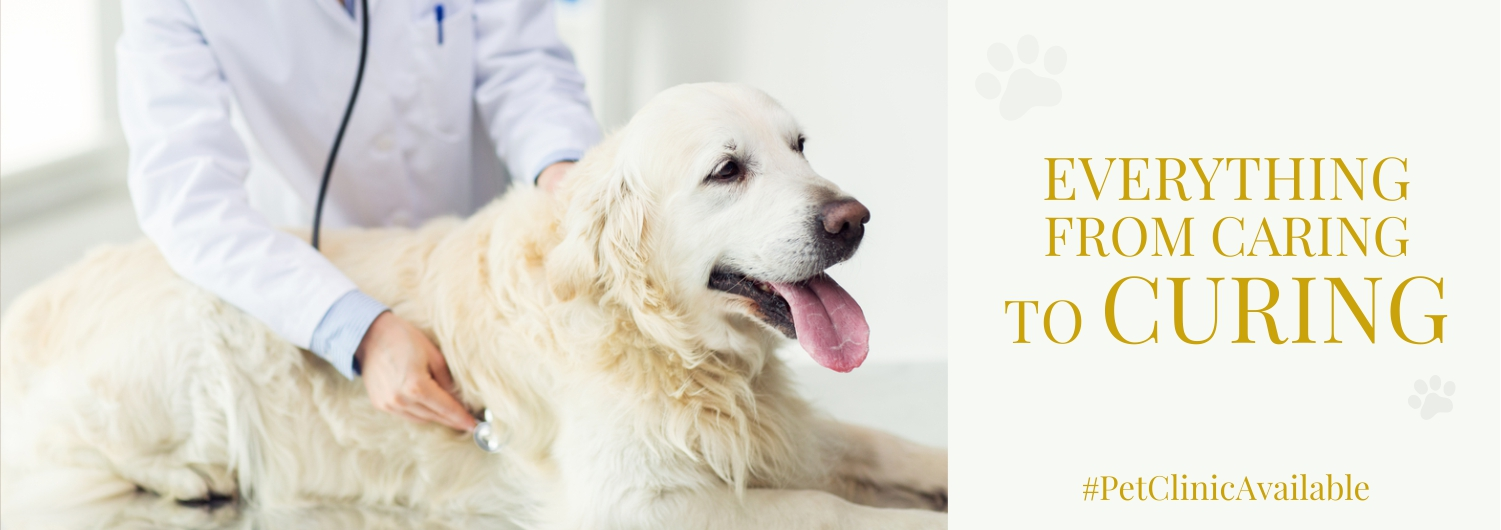 Pet clinic gurgaon