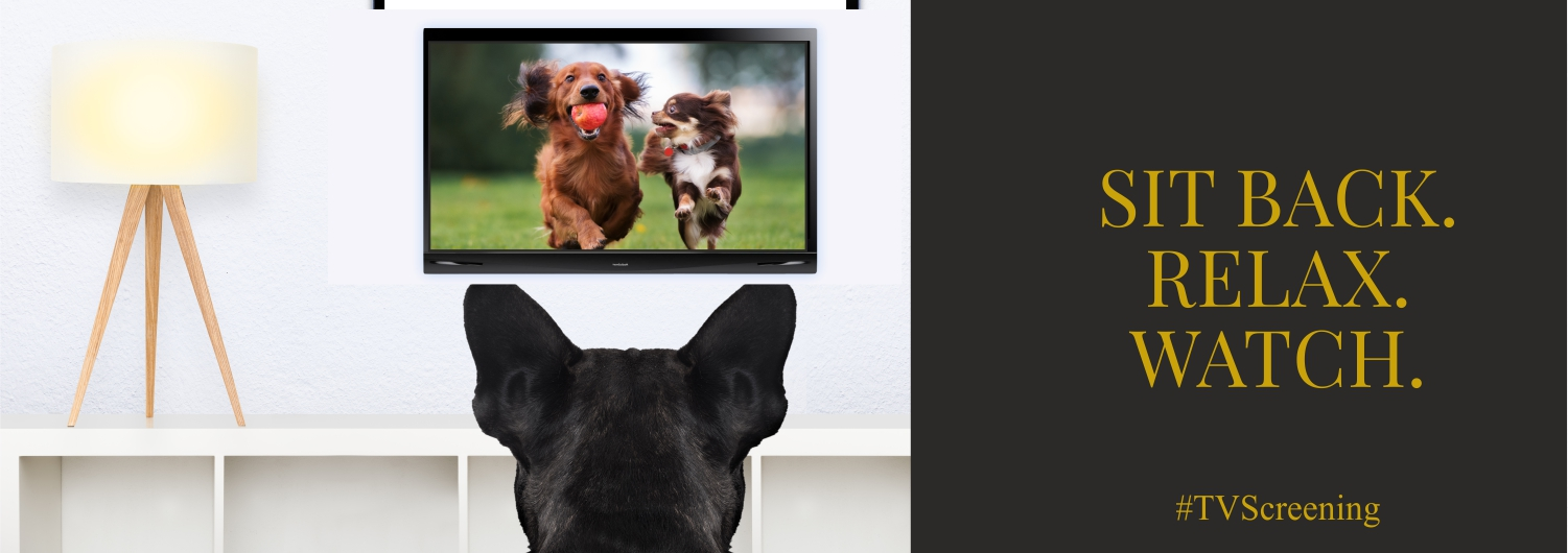 pet tv screening