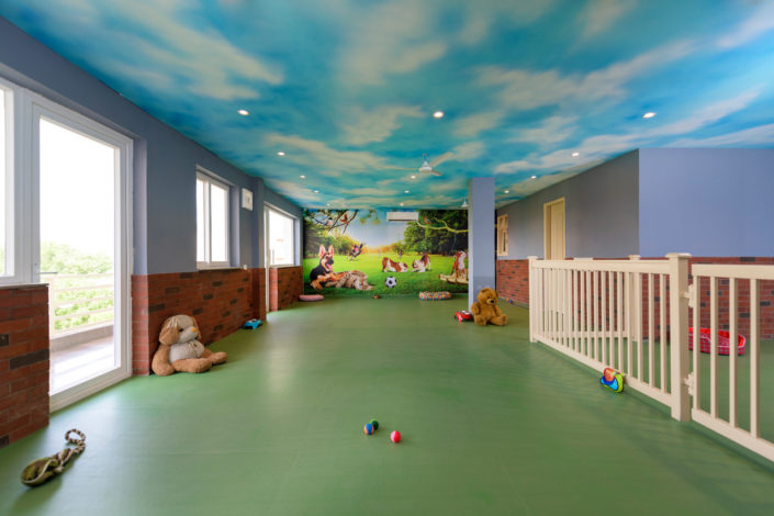 Pet play area