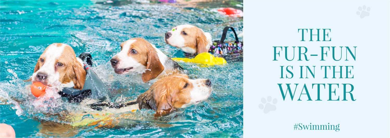 Professional Dog Swimming